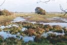 Die Wümmewiesen
